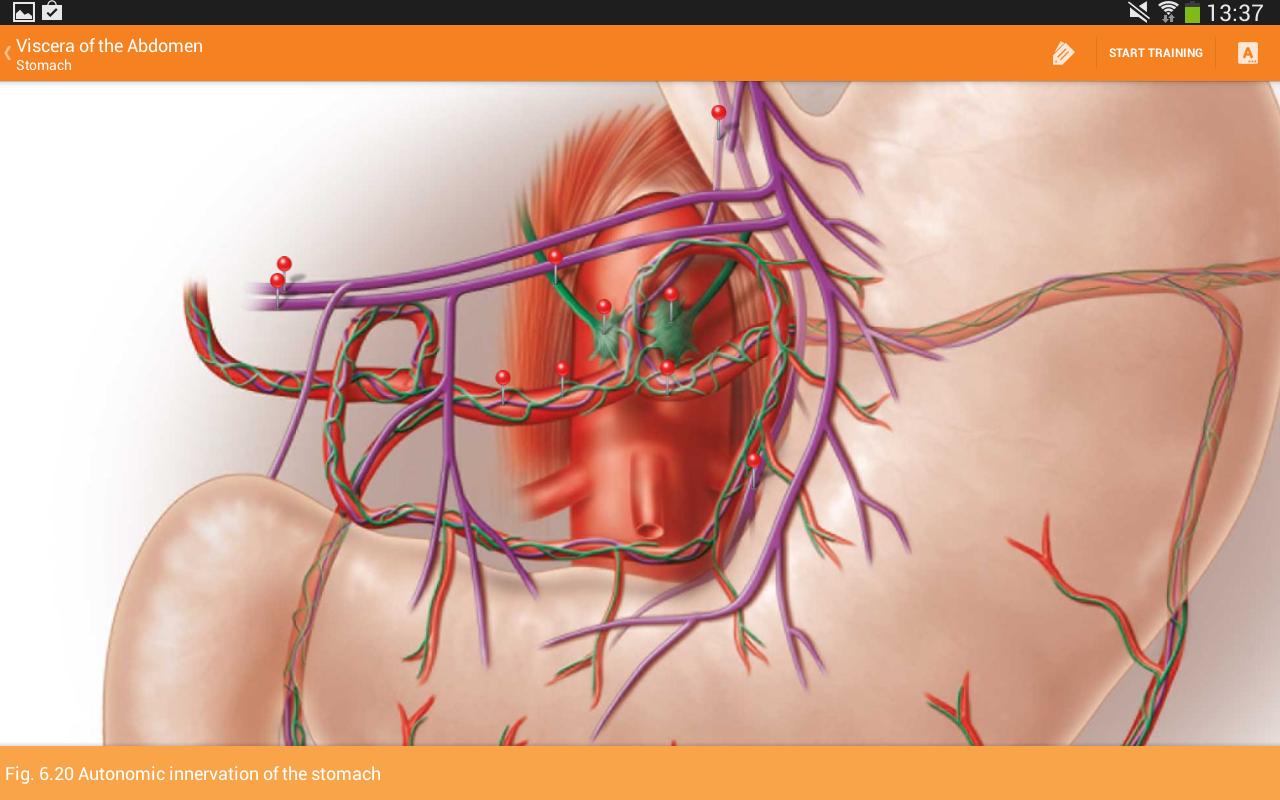 Download Sobotta Anatomy Atlas LITE For Android | Sobotta
