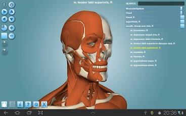 Anatomy 3D Pro - Anatronica